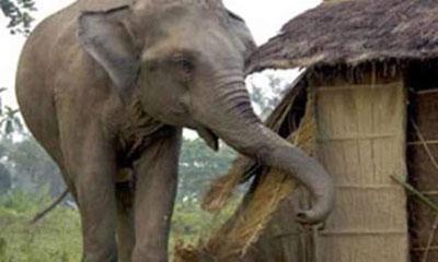 বান্দরবানে বন্য হাতির আক্রমণে কৃষকের মৃত্যু