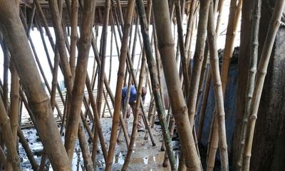 এডিস মশার লার্ভা পাওয়ায় মোবাইল কোর্টের জরিমানা