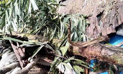 কেন্দুয়ায় ঝড়ে ঘরের ওপর গাছ পড়ে কৃষকের মৃত্যু