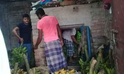 পার্বতীপুরে তাপ ও রাসায়নিক দিয়ে পাকানো হচ্ছে কলা
