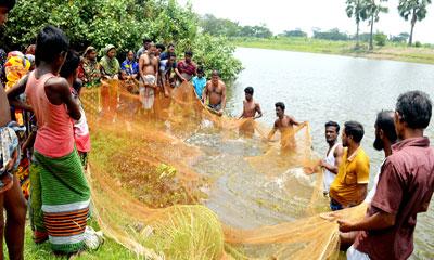 কৃষি পেশা বদলে মৎস্য চাষে ঝুঁকছেন রাঙ্গাবালীর কৃষক