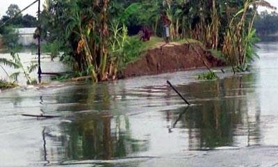 শেরপুরে বেড়িবাঁধেভাঙন, নতুন করে পানিবন্দি৩০ হাজার মানুষ