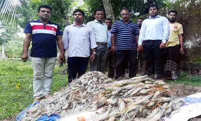 সুন্দরবনে বিষ দিয়ে শিকার করা ৮০ কেজি চিংড়ি জব্দ
