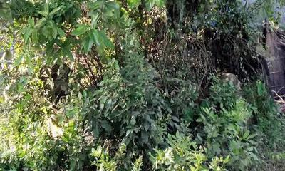 বকশিগঞ্জে ঝোপজঙ্গলে ছেয়ে গেছে শহীদের কবর