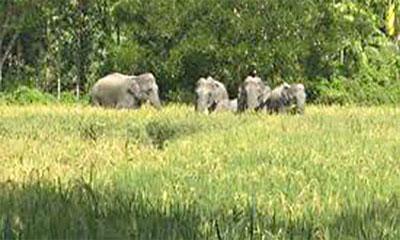 চট্টগ্রামে বন্য হাতির আক্রমণে কৃষকের মৃত্যু