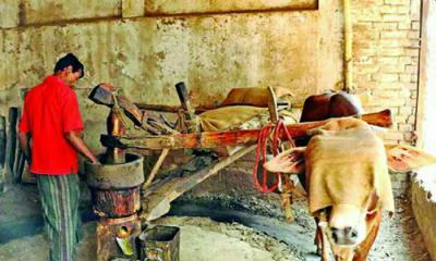 কালের সাক্ষী তেলের ঘানি