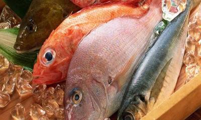 সামুদ্রিক মাছ কেন খাবেন